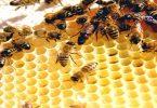 arılardan alınan ilham