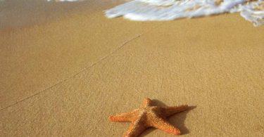 deniz-yildizi